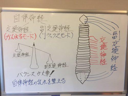 自律神経の説明