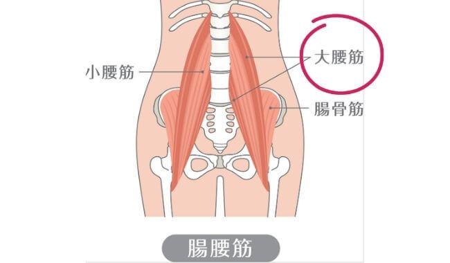 腸腰筋 大腰筋